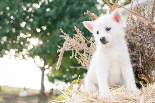 Ảnh lưu trữ miễn phí về cận cảnh, canidae, chó, chụp ảnh động vật