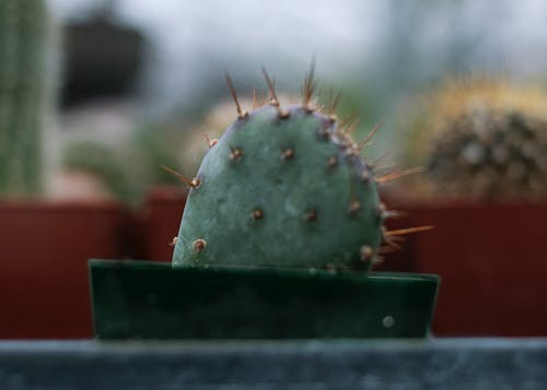 Free stock photo of cacti, cactus, greenhouse, plants