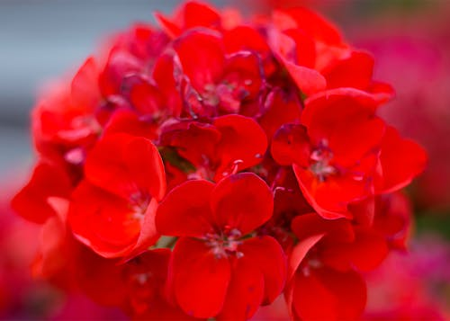 Free stock photo of floral, greenhouse, red