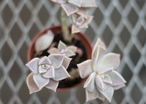 Free stock photo of greenhouse, succulent, succulent plants