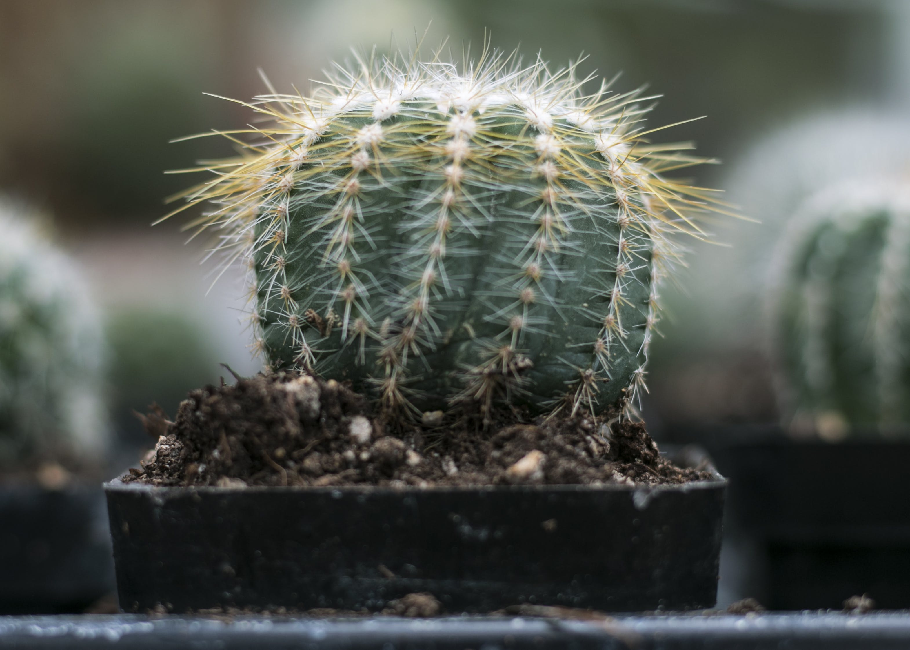 Close-Up Photography of Cactus