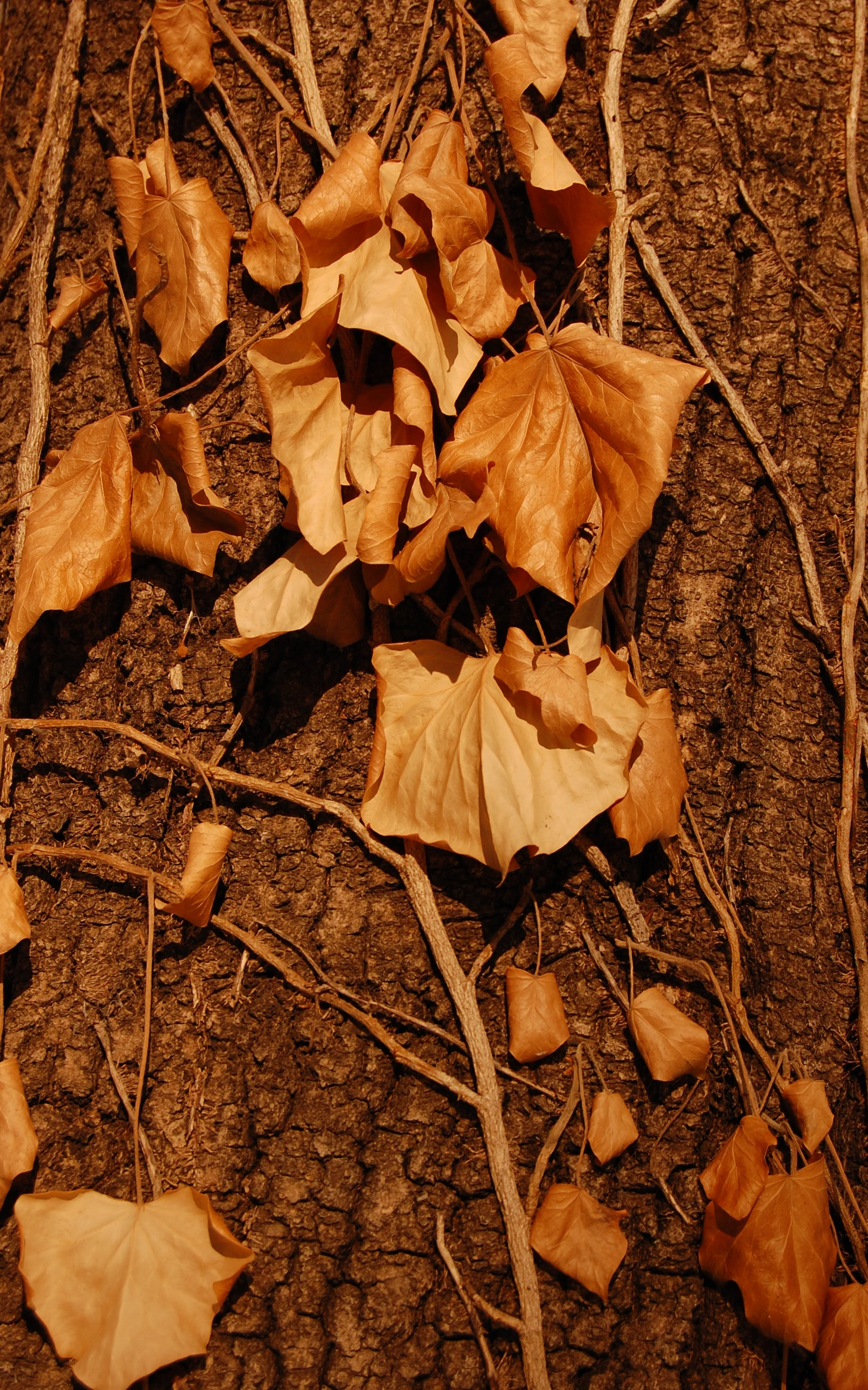 Free stock photo of autumn, ikebana, leaf