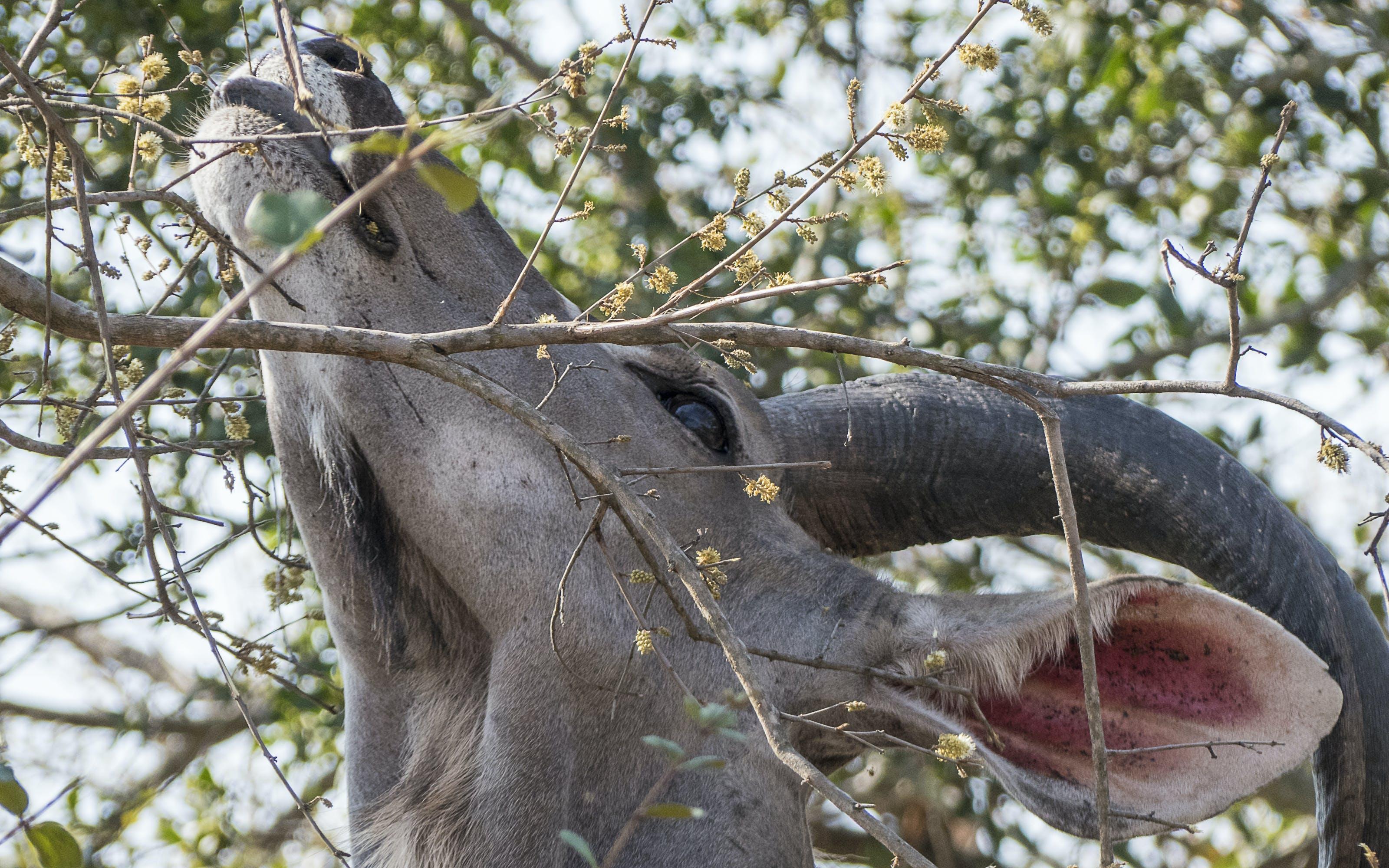 Animal Eating Leaves