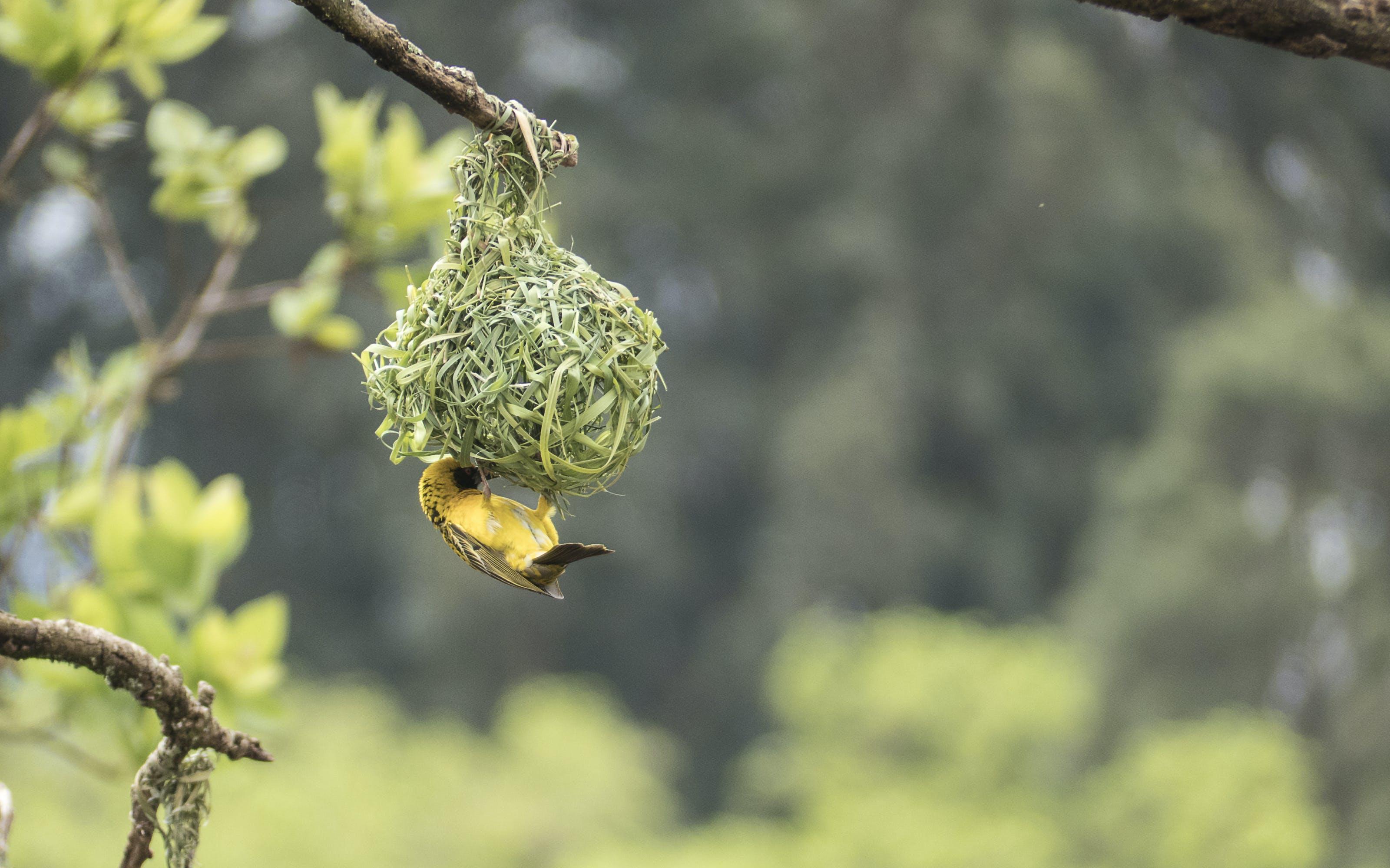 Close-Up Photography of Bird