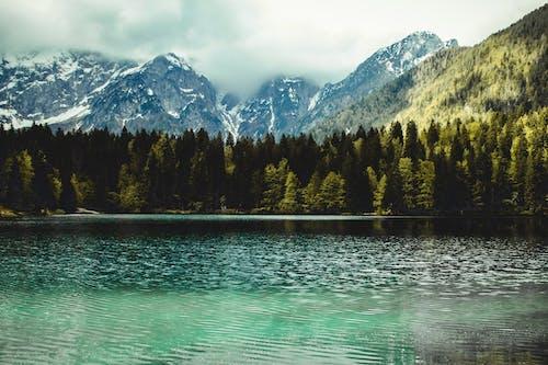 ağaçlar, bakir bölge, çam ağaçları, çevre içeren Ücretsiz stok fotoğraf