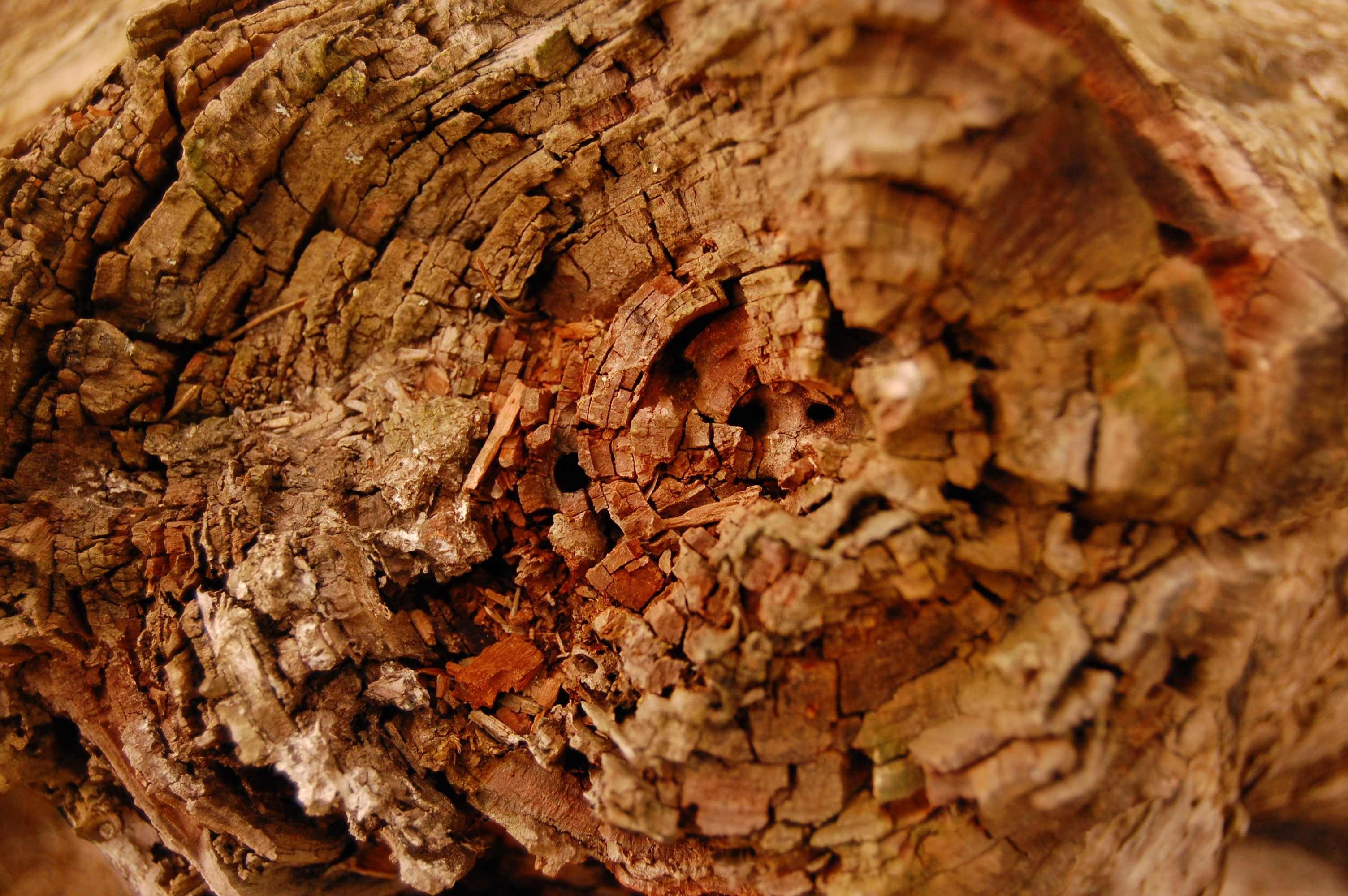 Free stock photo of Fibonacci, matrix, wood
