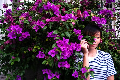 Close-Up Photography of Woman Near Purple Bougainvillea