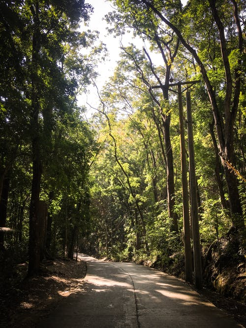 Photography of Roadway Surrounded By Trees