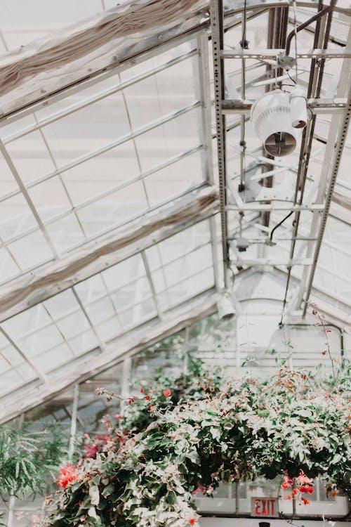 arhitectură, botanic, centrale