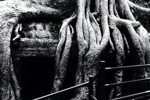 Immagine gratuita di root profondo