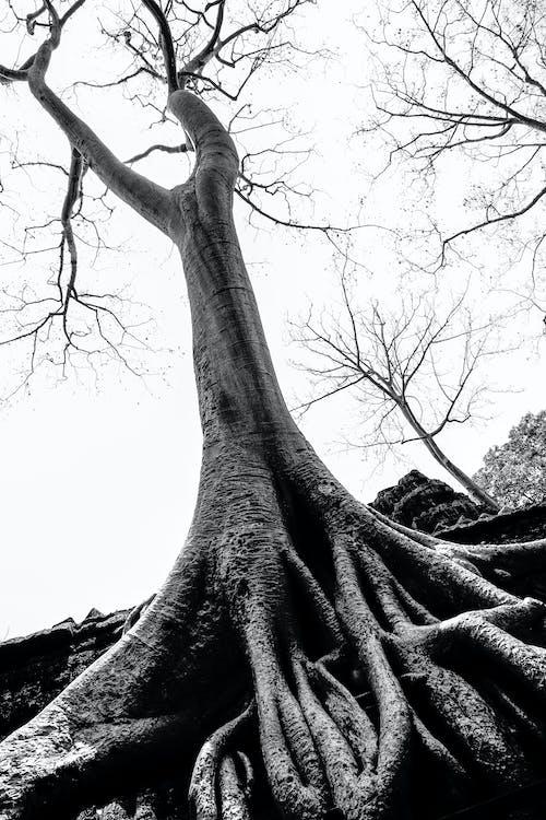 Immagine gratuita di albero incredibile