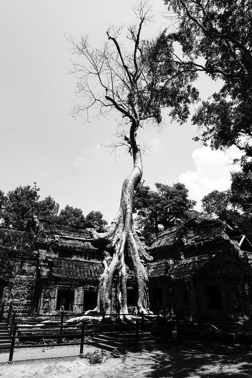 令人惊叹的树木 的 免费素材照片