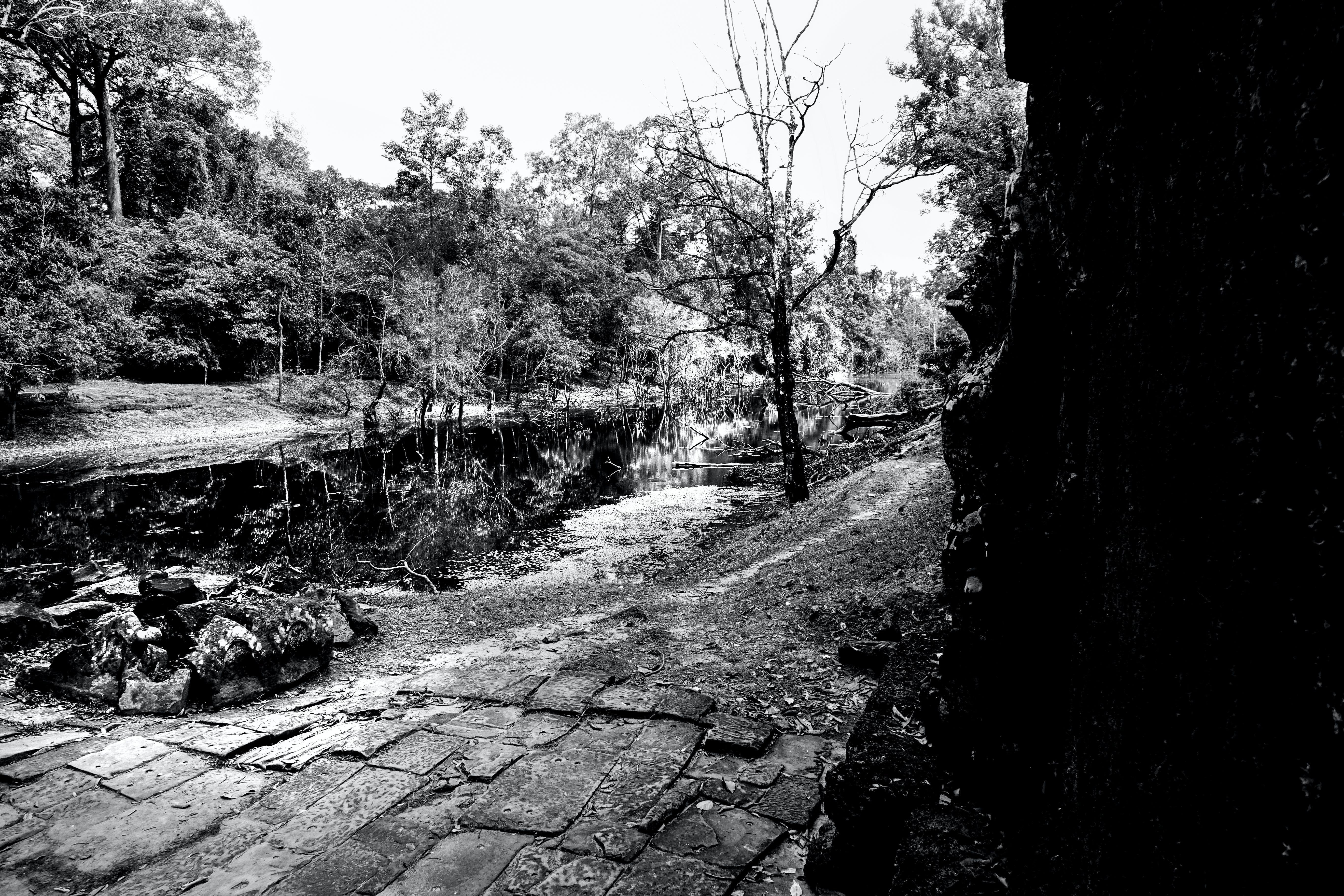 siyah ve beyaz orman içeren Ücretsiz stok fotoğraf