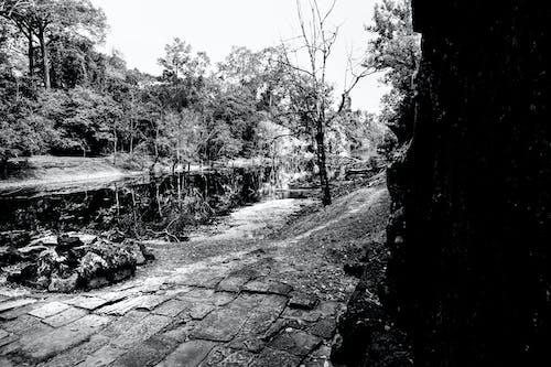 Immagine gratuita di foresta in bianco e nero