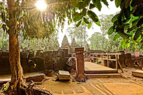 Gratis stockfoto met bomen, brug, dag, daglicht