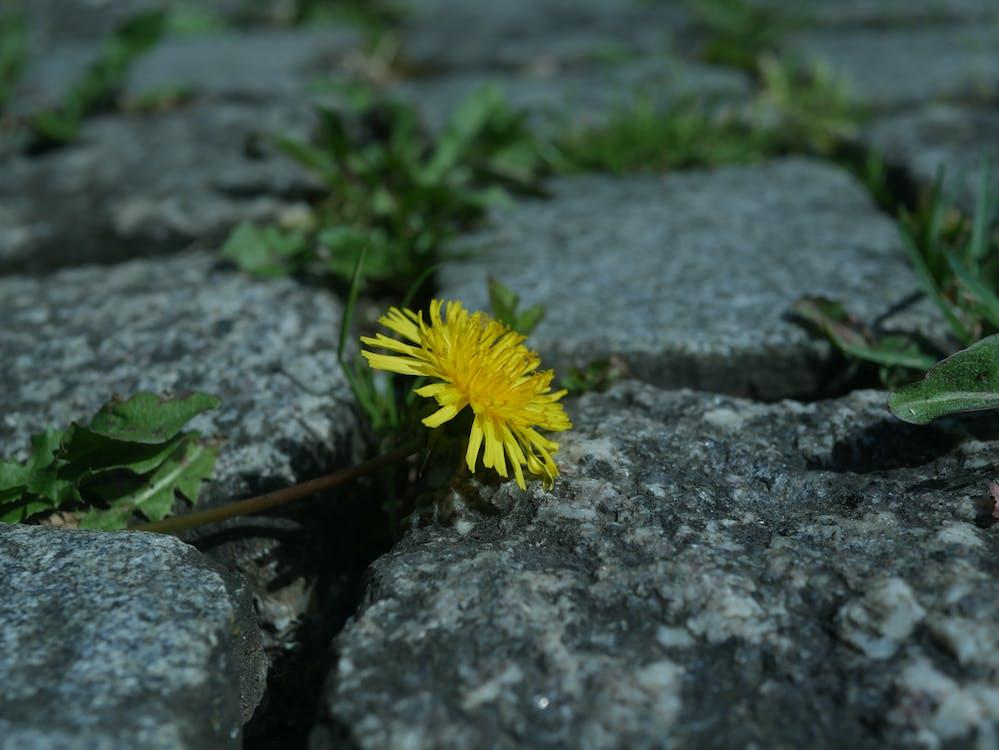 꽃, 도시, 부서진