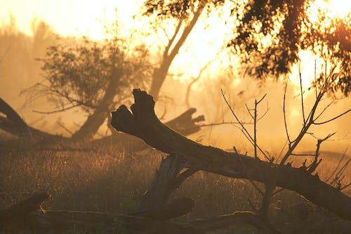 Foto profissional grátis de árvores, floresta, nascer do sol, natureza