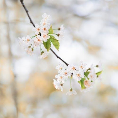 Foto d'estoc gratuïta de a l'aire lliure, arbre, blanc