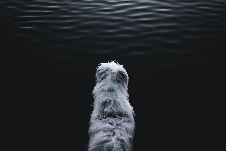 White Animal Near Body of Water