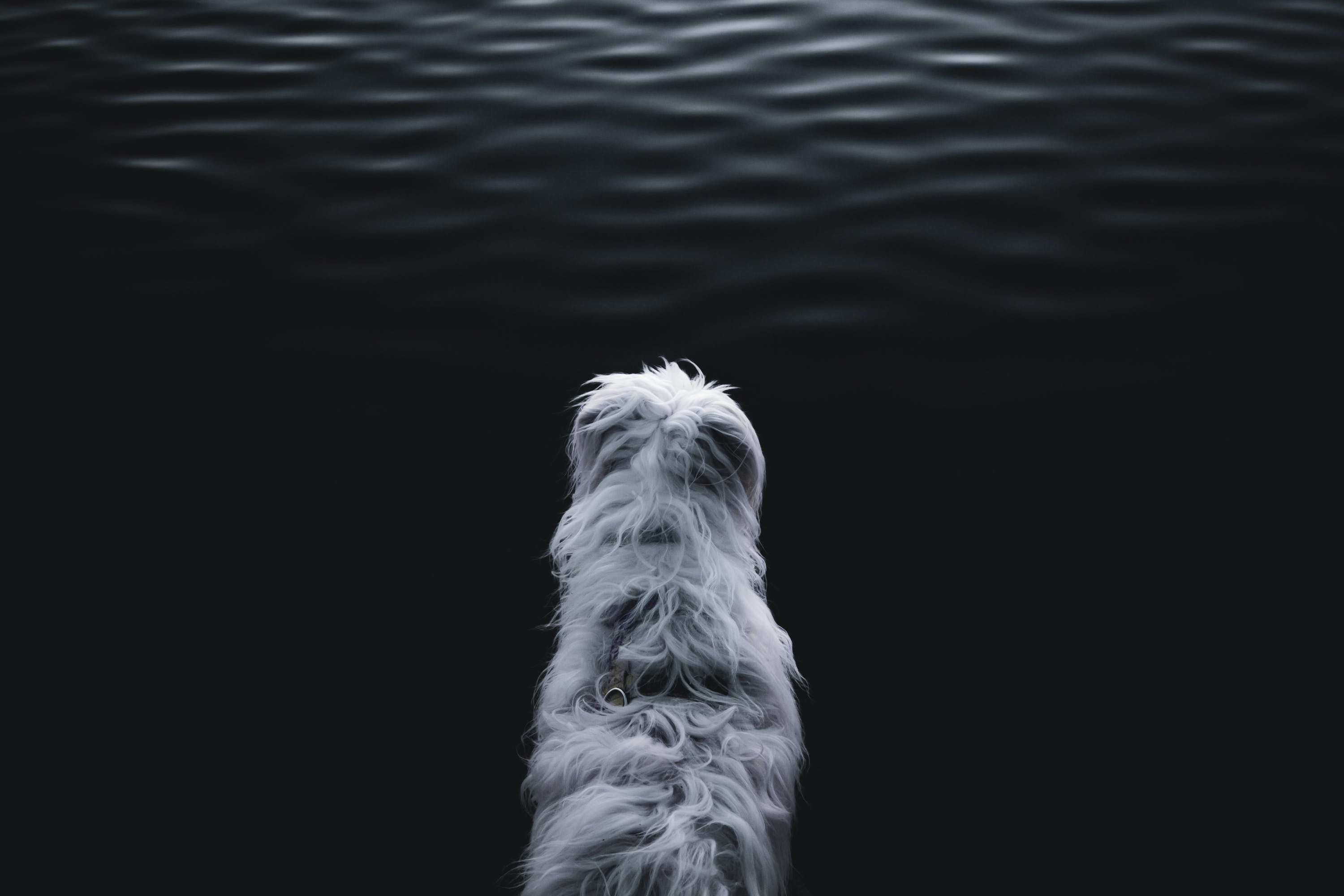 White Animal Near Body of Water
