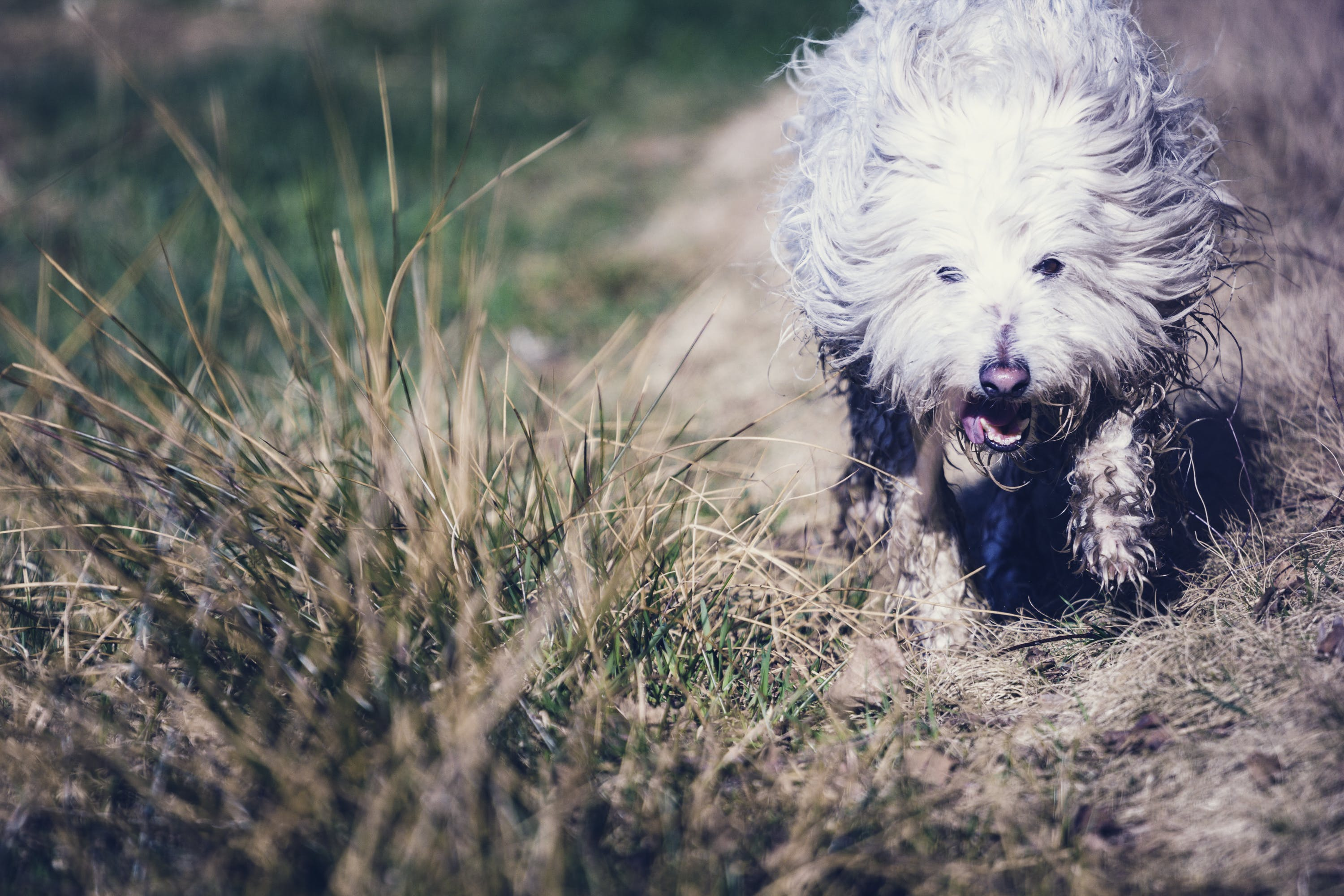 Photography of Dog in the Field