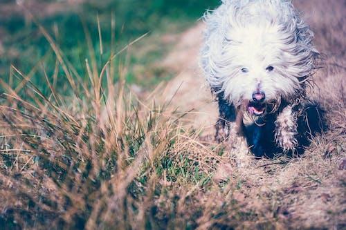 Photos gratuites de à fourrure, à poils, animal, animal de compagnie