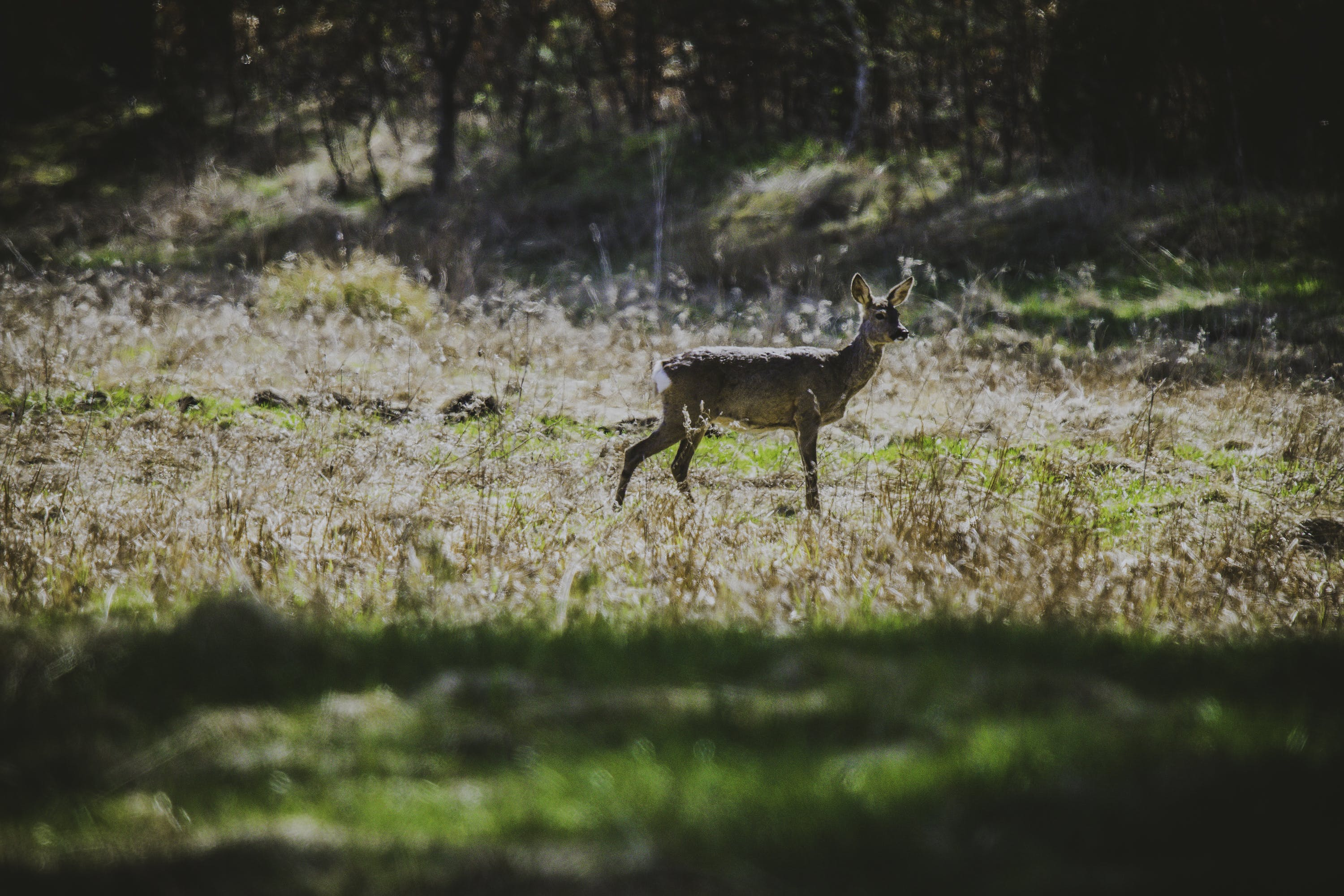 Photography of Deer in the Field