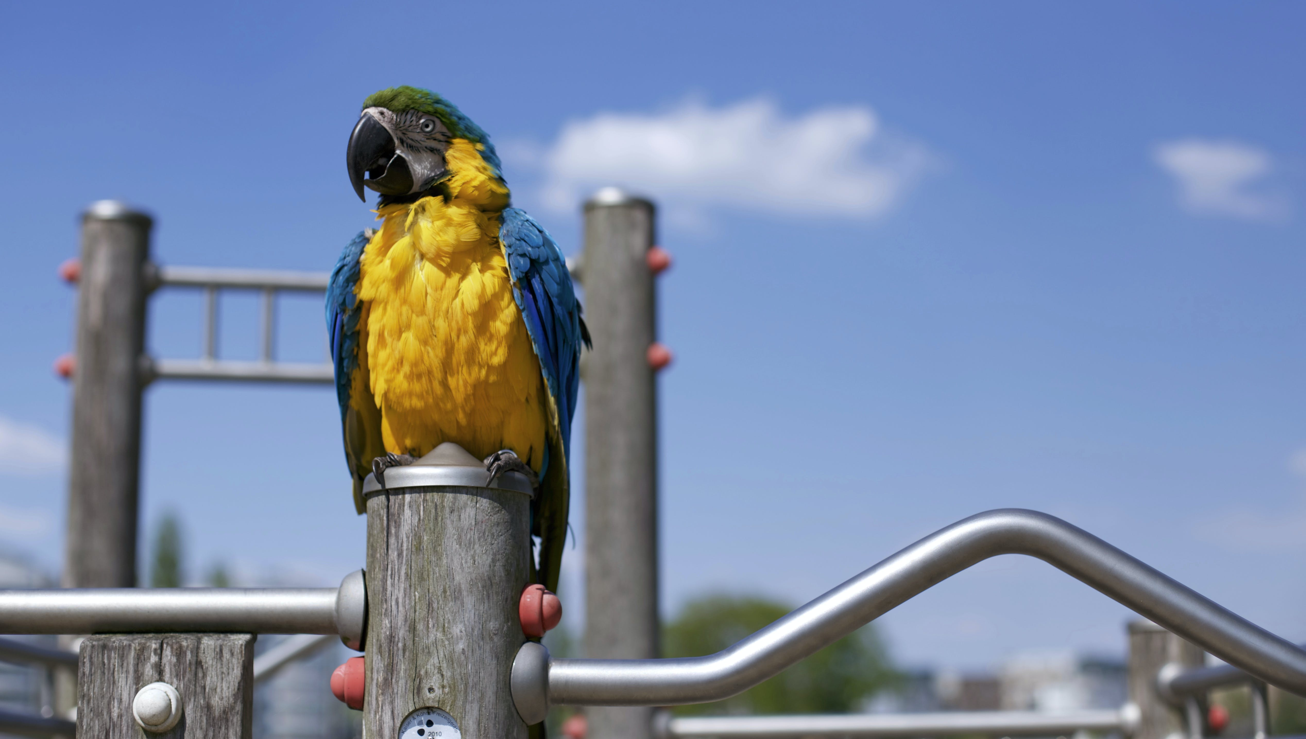 Scarlet Macaw on Brown Wooden Framed Metal Railing during Daytime in Macro Photography