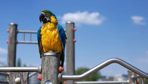 Foto profissional grátis de animal, arara, cheio de cor, colorido