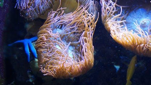 Gratis lagerfoto af koral, søstjerne
