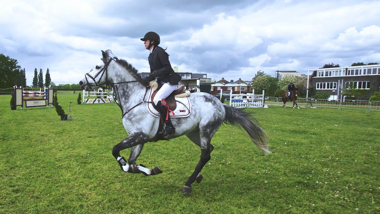 animal, cheval, équitation