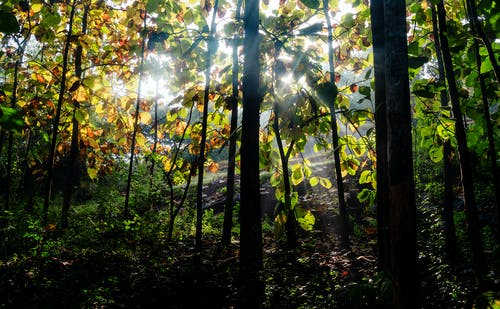 Fotos de stock gratuitas de amarillo dorado, bosque, faro posterior