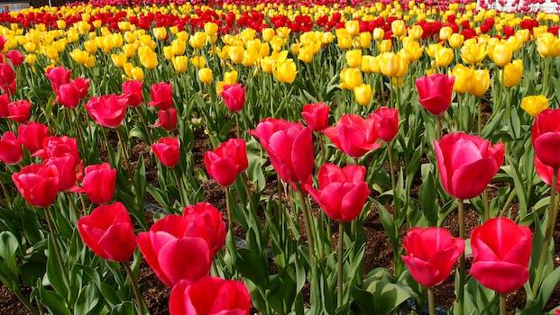 Flower wallpaper pexels free stock photos red petaled flower mightylinksfo