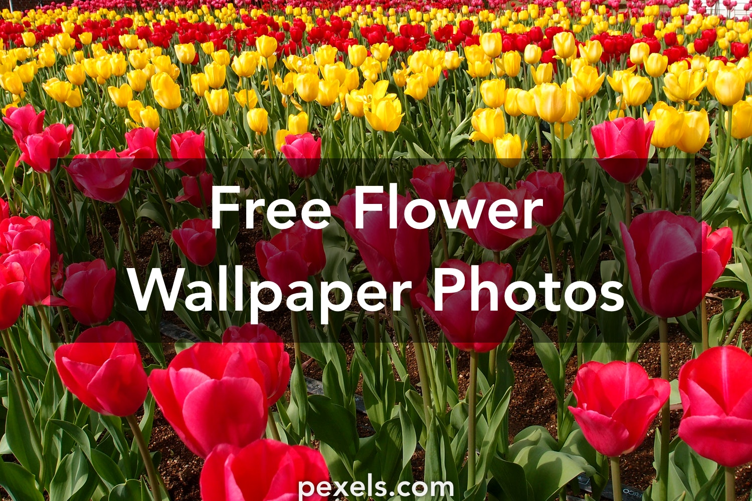 Flower wallpaper pexels free stock photos voltagebd Gallery