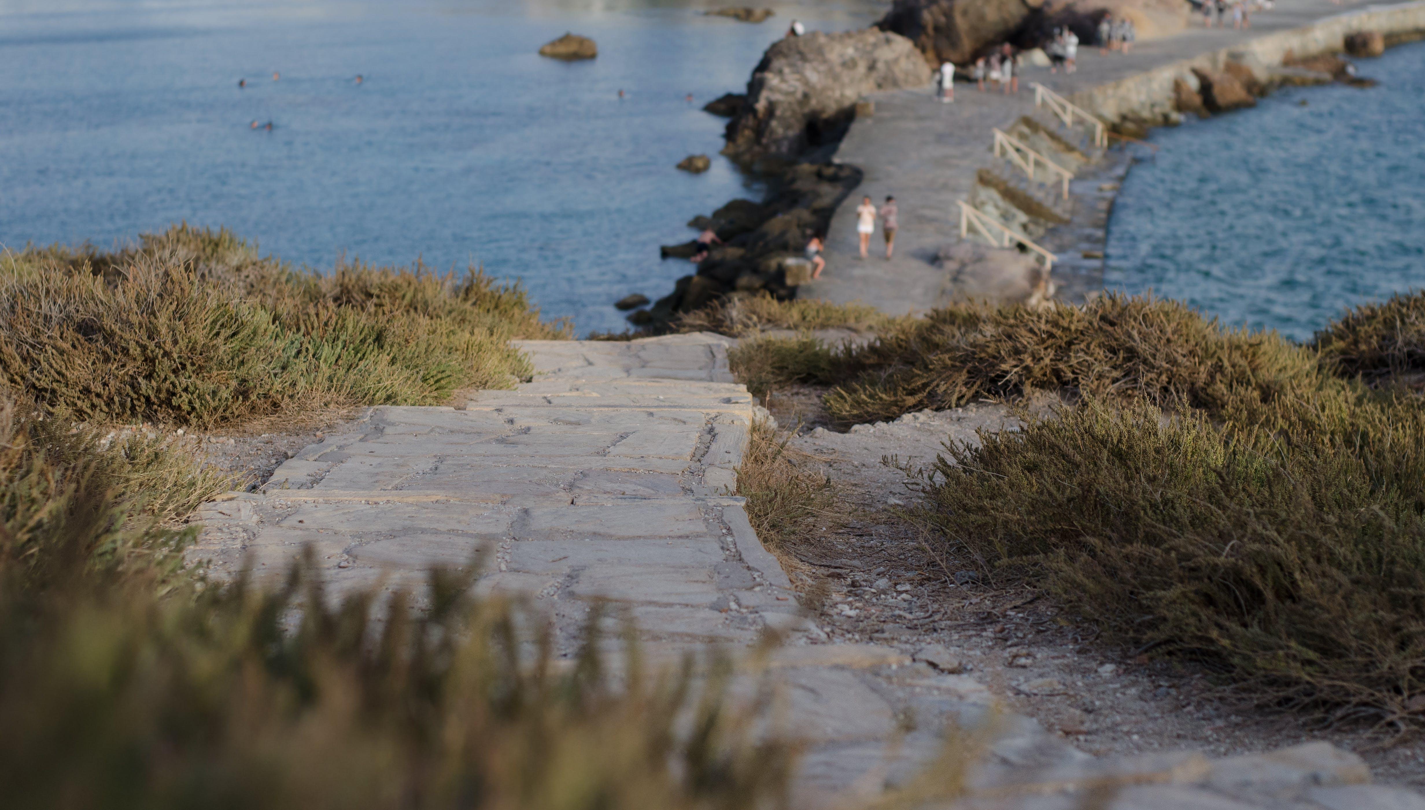 Selective Focus Photography of Green Grass Near Beach