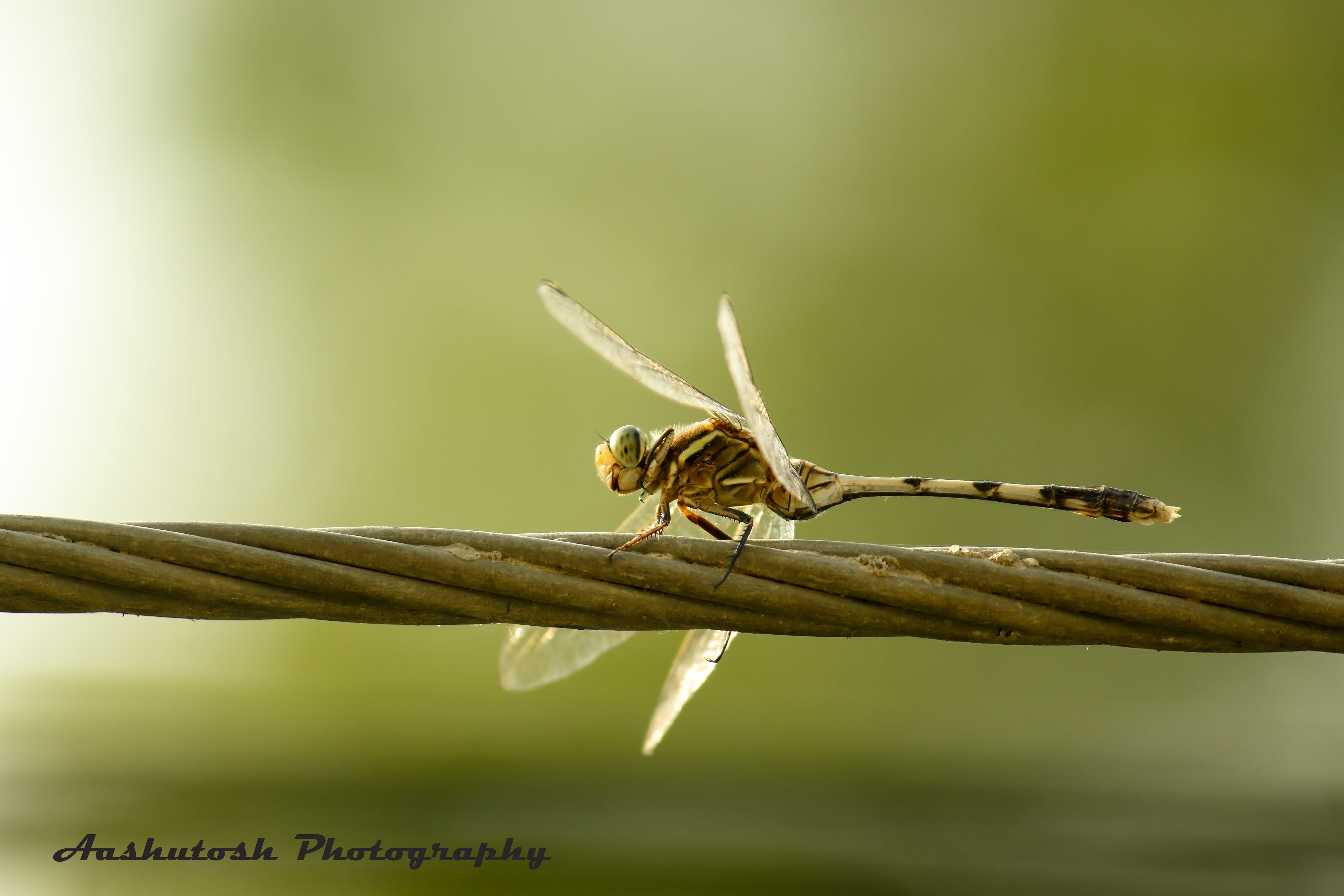 Gratis stockfoto met #natura #przyroda #king_insects #ig_insects #insec