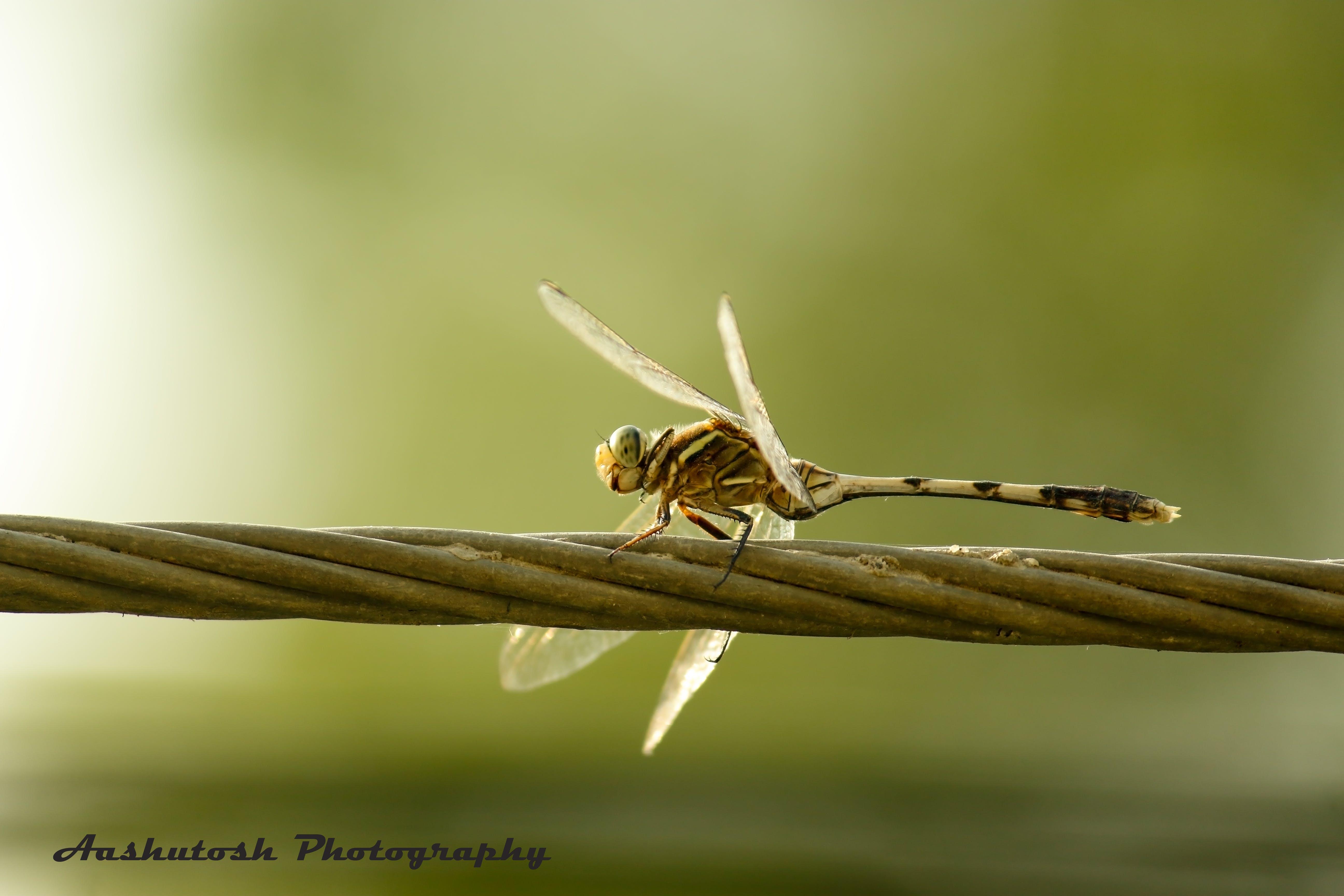Foto d'estoc gratuïta de #natura #przyroda #king_insects #ig_insects #insec