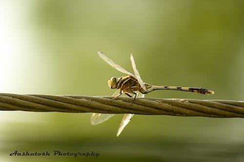 Immagine gratuita di #natura #przyroda #king_insects #ig_insects #insec