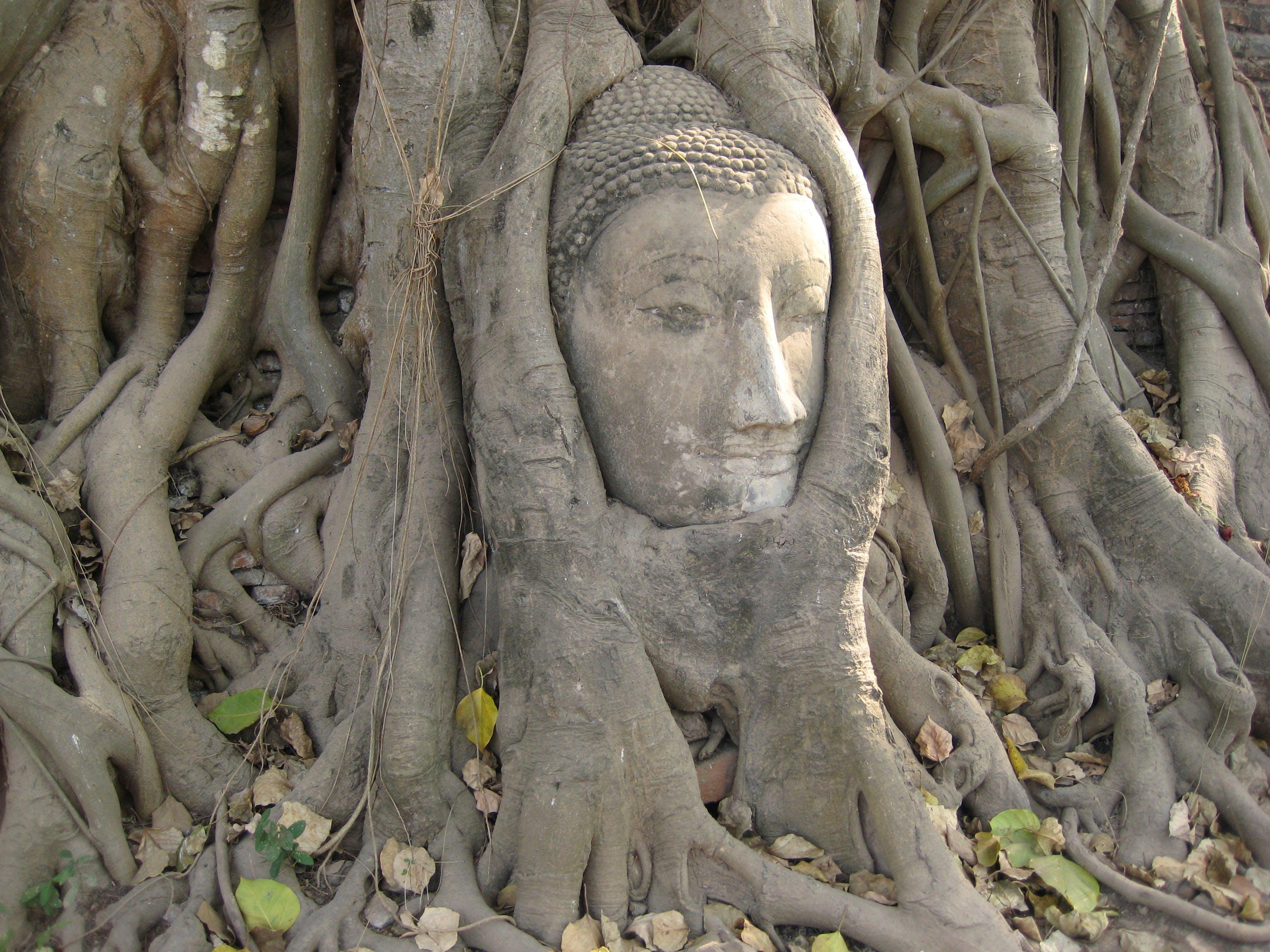 Free stock photo of ancient, asia, ayutthaya, brown