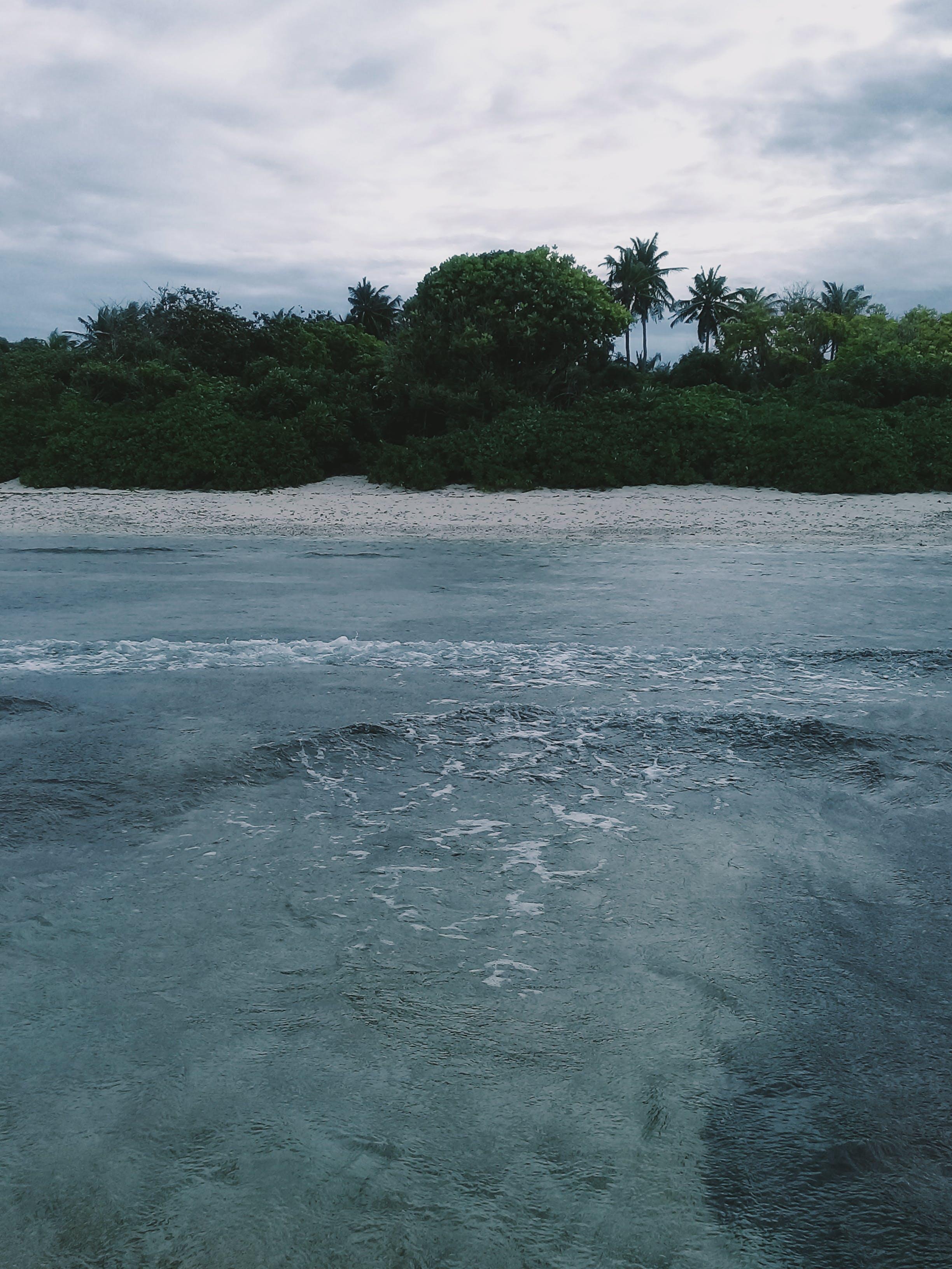 Δωρεάν στοκ φωτογραφιών με Surf, ακτή, άμμος, δέντρο