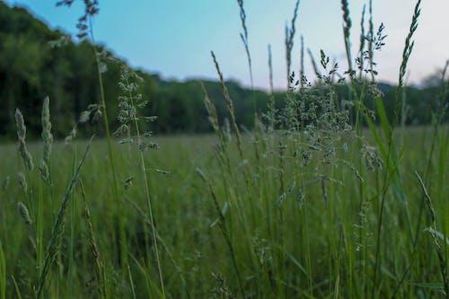 Безкоштовне стокове фото на тему «HD шпалери, заводи, Захід сонця, трава»