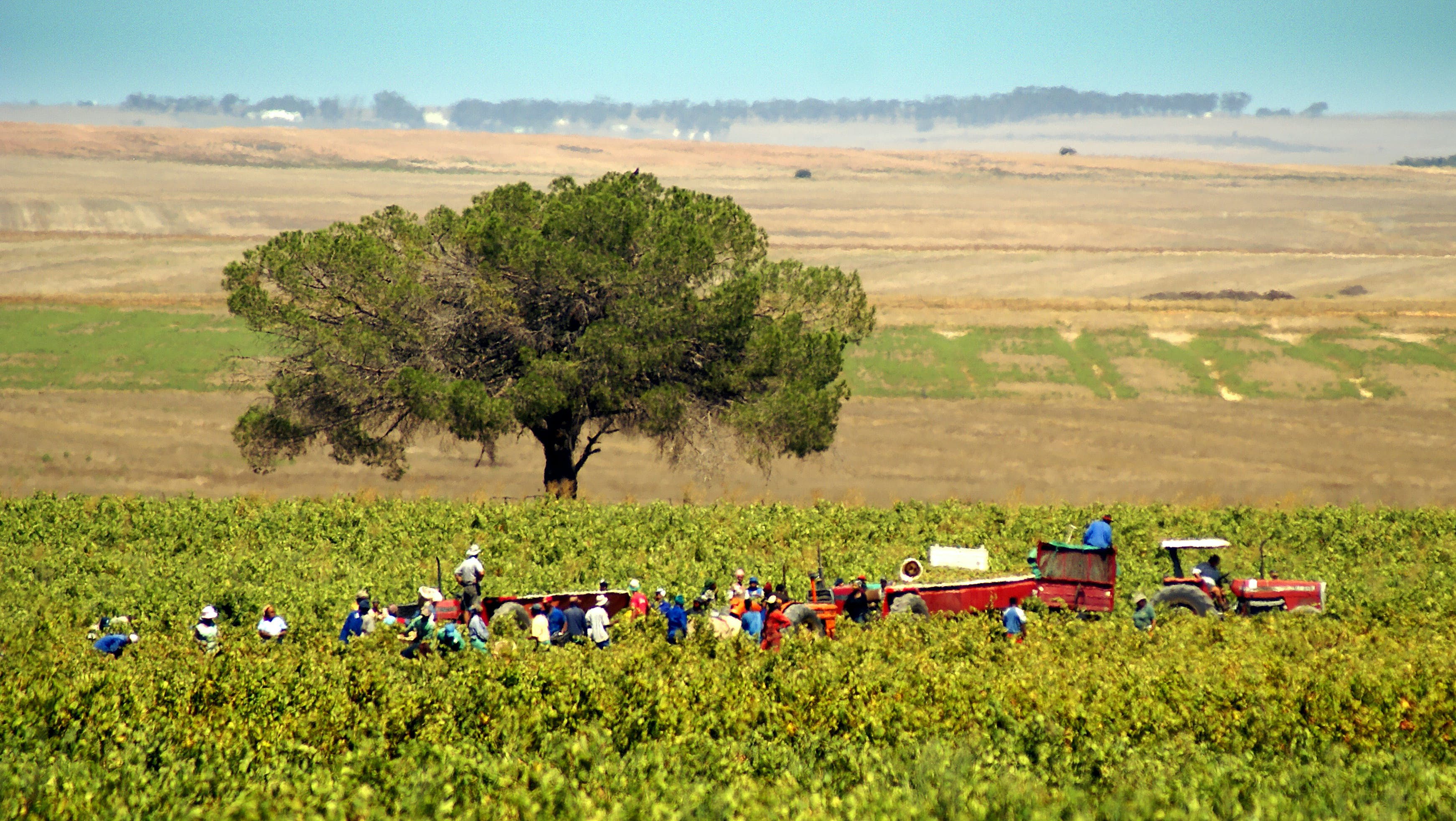 farm workers, harvest