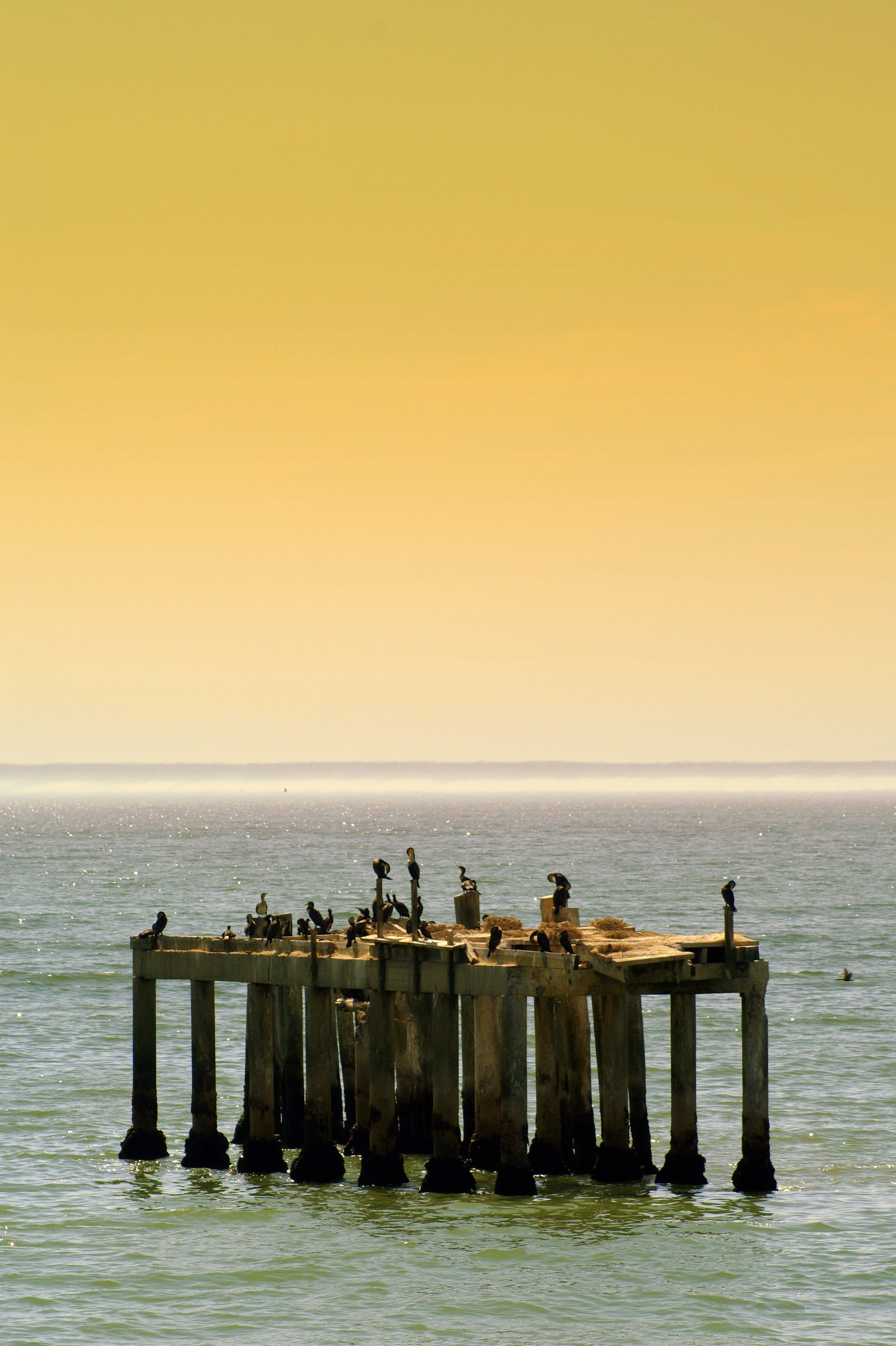 Birds on Brown Wooden Dock