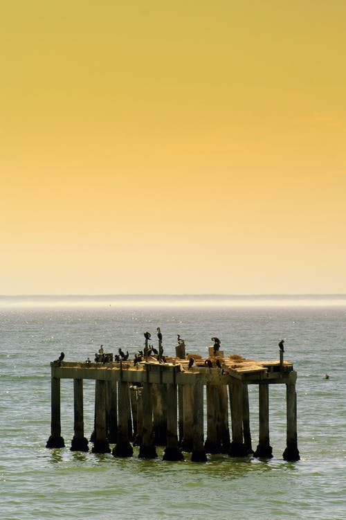 Birds on Brown Wooden Dock