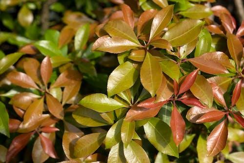 Бесплатное стоковое фото с выращивание, заводы, зеленый, красный