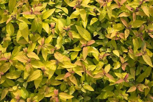 Бесплатное стоковое фото с выращивание, заводы, зеленый, красочный