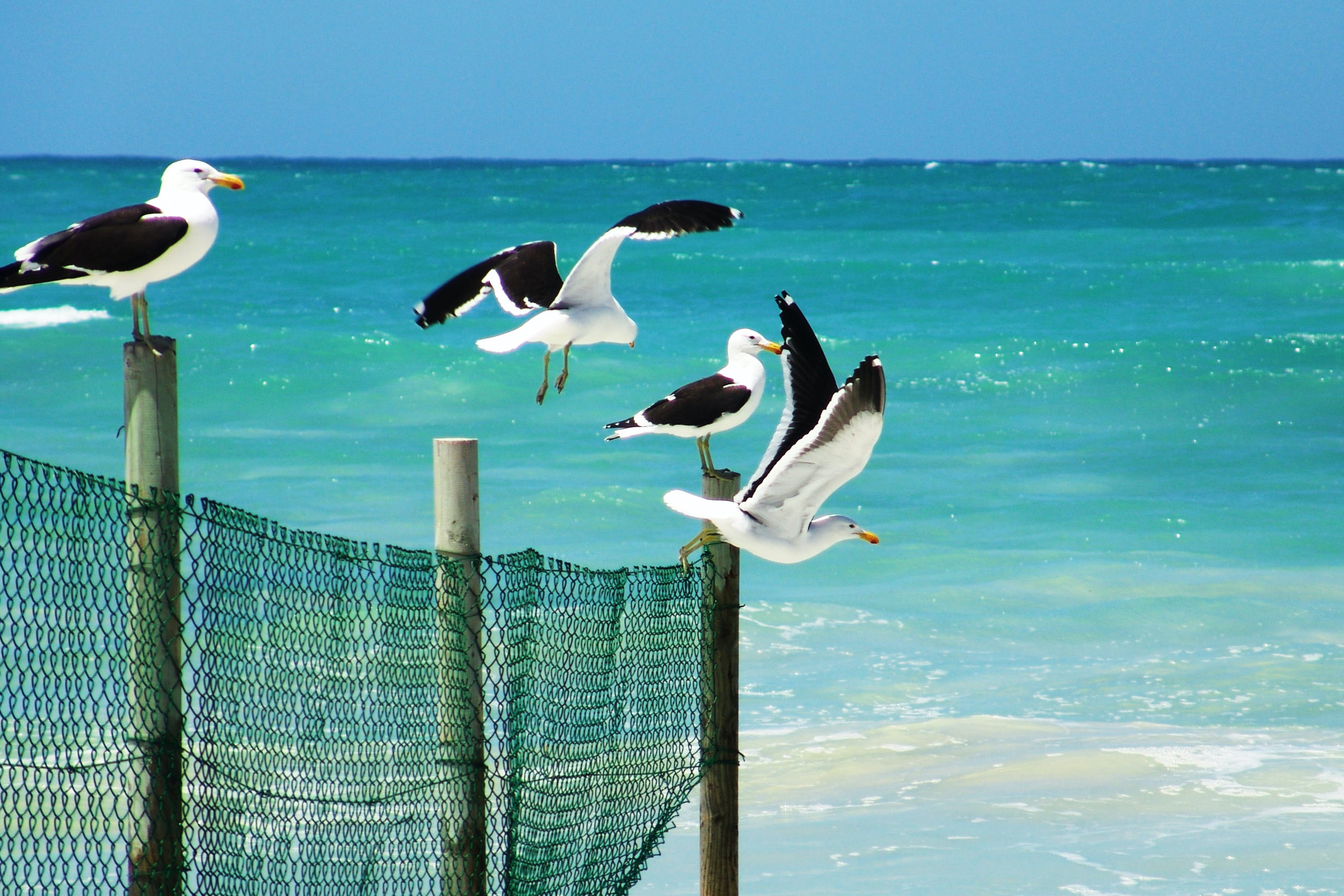 Seagulls Standing on a Wooden Fence Near a Beach