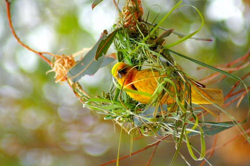 Yellow and Green Building Nest
