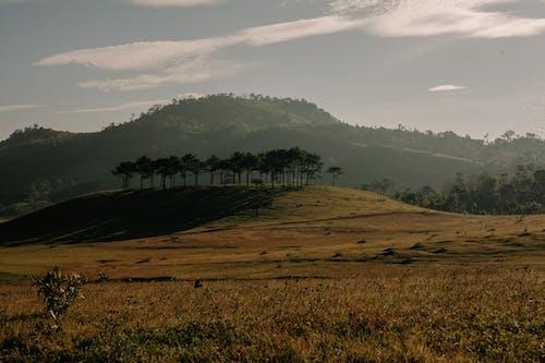 層, 日光, 景觀, 松樹 的 免费素材照片