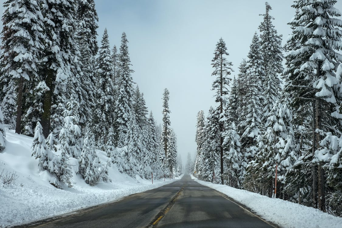 Trees Beside the Road Covered With Snow